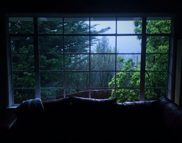 Best Evening Green Home Nature Photography Rain Rainy With Pictures