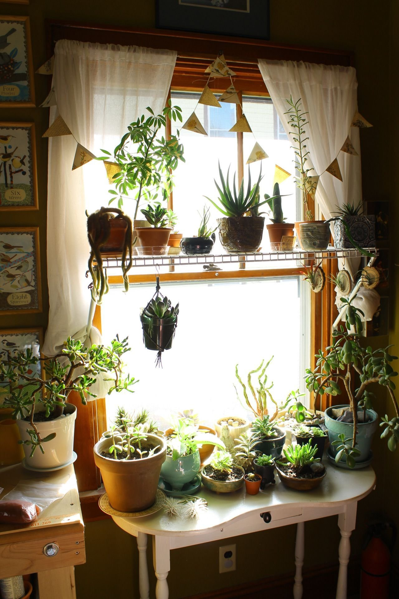 Best This Is Exactly What A Plant Addiction Looks Like And With Pictures