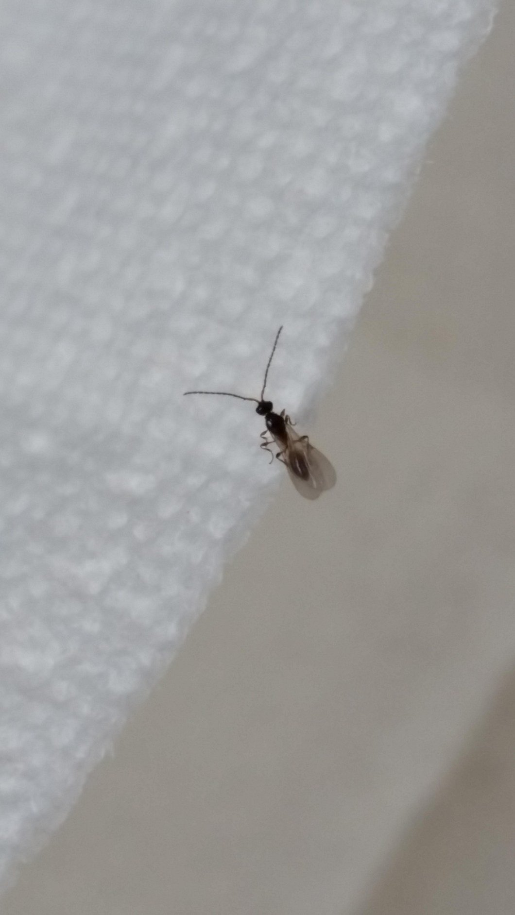 Best Small Flying Bugs In Bedroom Psoriasisguru Com With Pictures