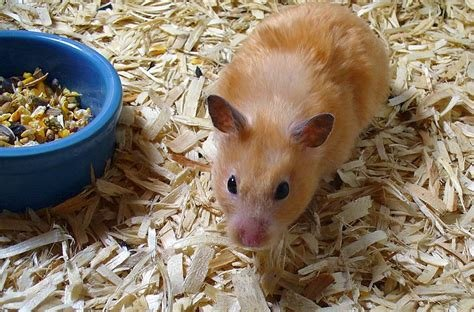Best Hamster Cages 6 Step Checklist To Create The Perfect With Pictures