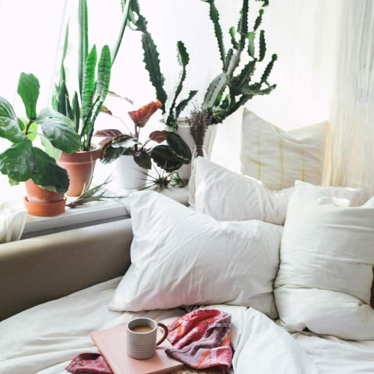 Best Bedrooms Should Be Plant Free Zones According To Feng Shui With Pictures