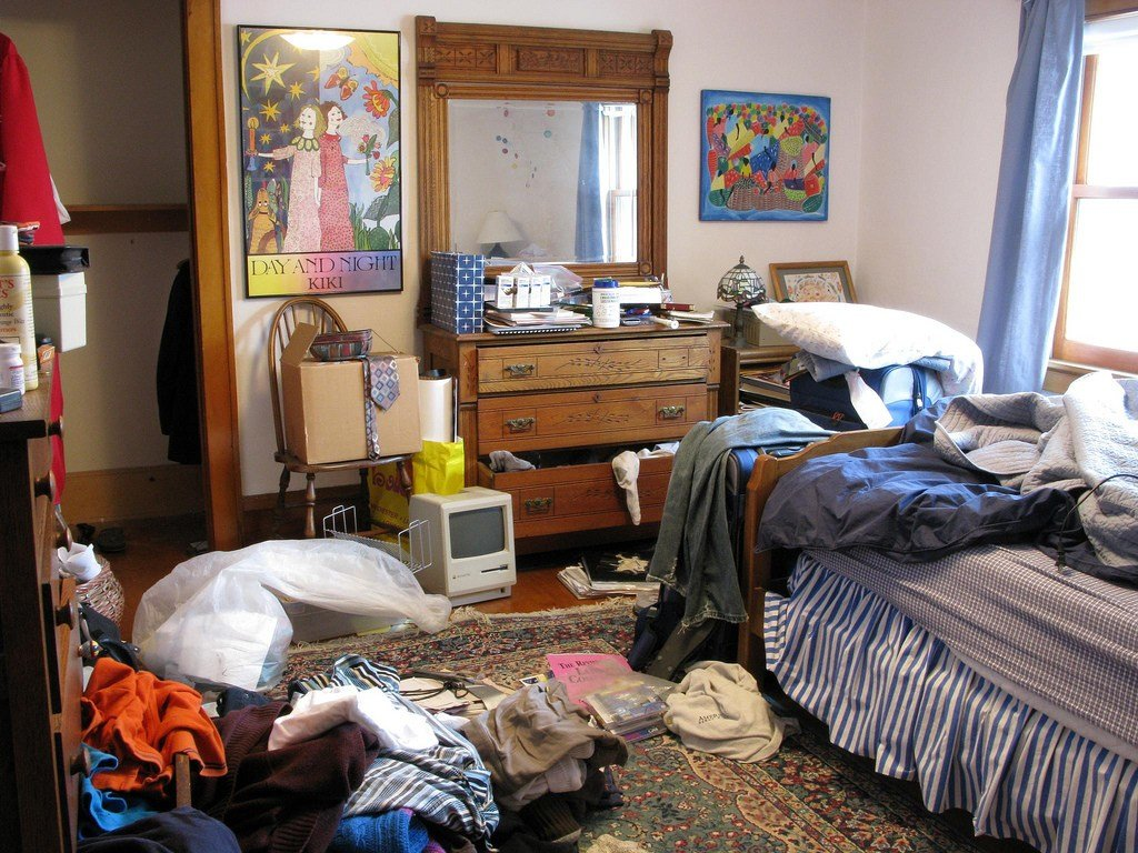 Best Clutter Doesn't Matter Really – Snowbird Of Paradise With Pictures