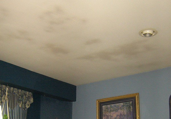 Best Ceiling Mold Growth Learn The Cause And How To Prevent It Environix With Pictures
