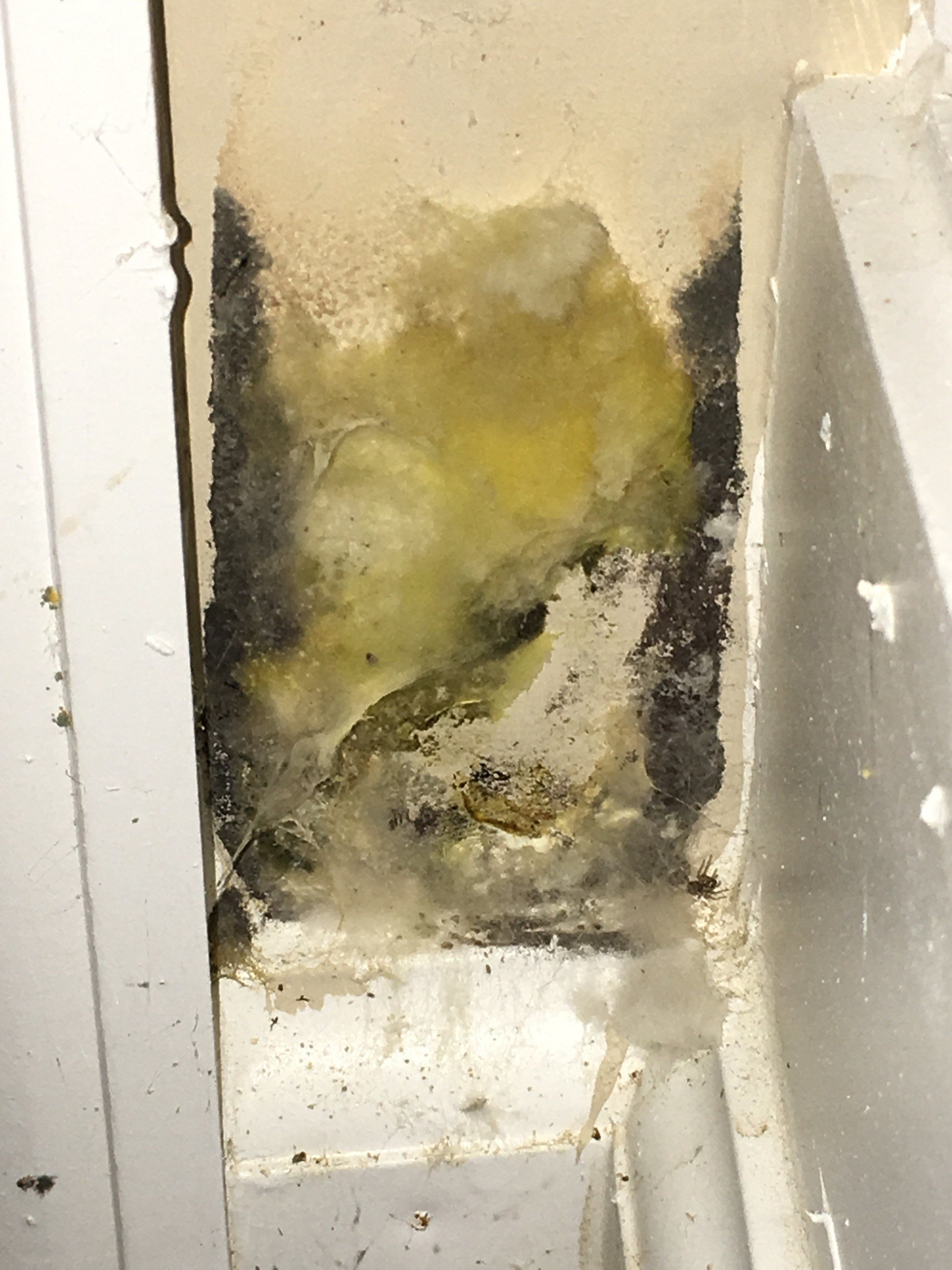 Best Mould In Bedroom Causing Cough Www Indiepedia Org With Pictures