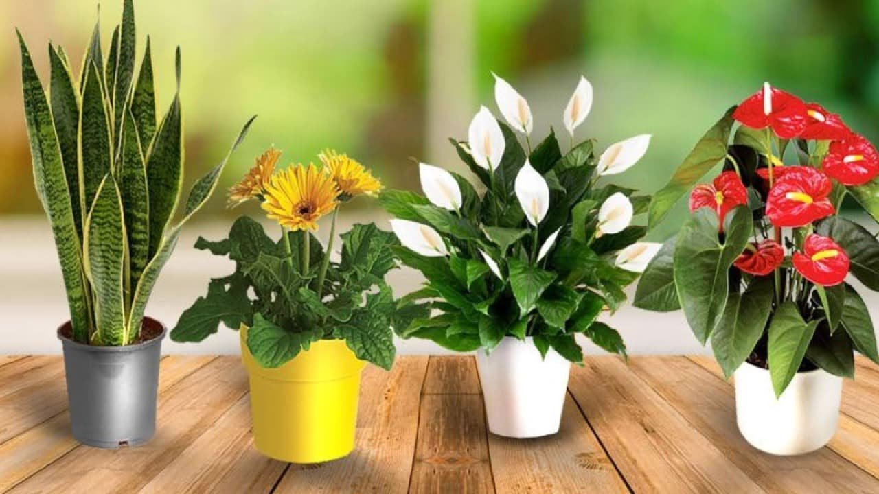 Best Put This Plants In Your Bedroom And This Will Happen To You Youtube With Pictures