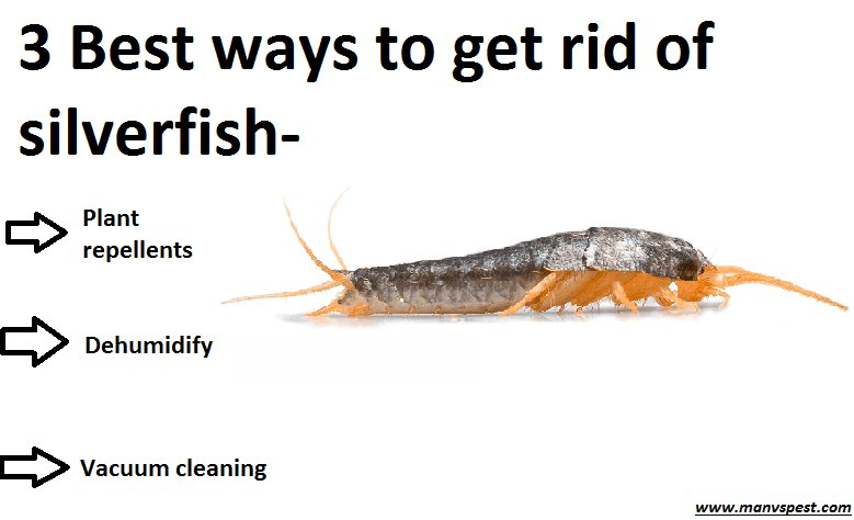 Best Get Rid Of Silverfish In Bedroom Www Indiepedia Org With Pictures