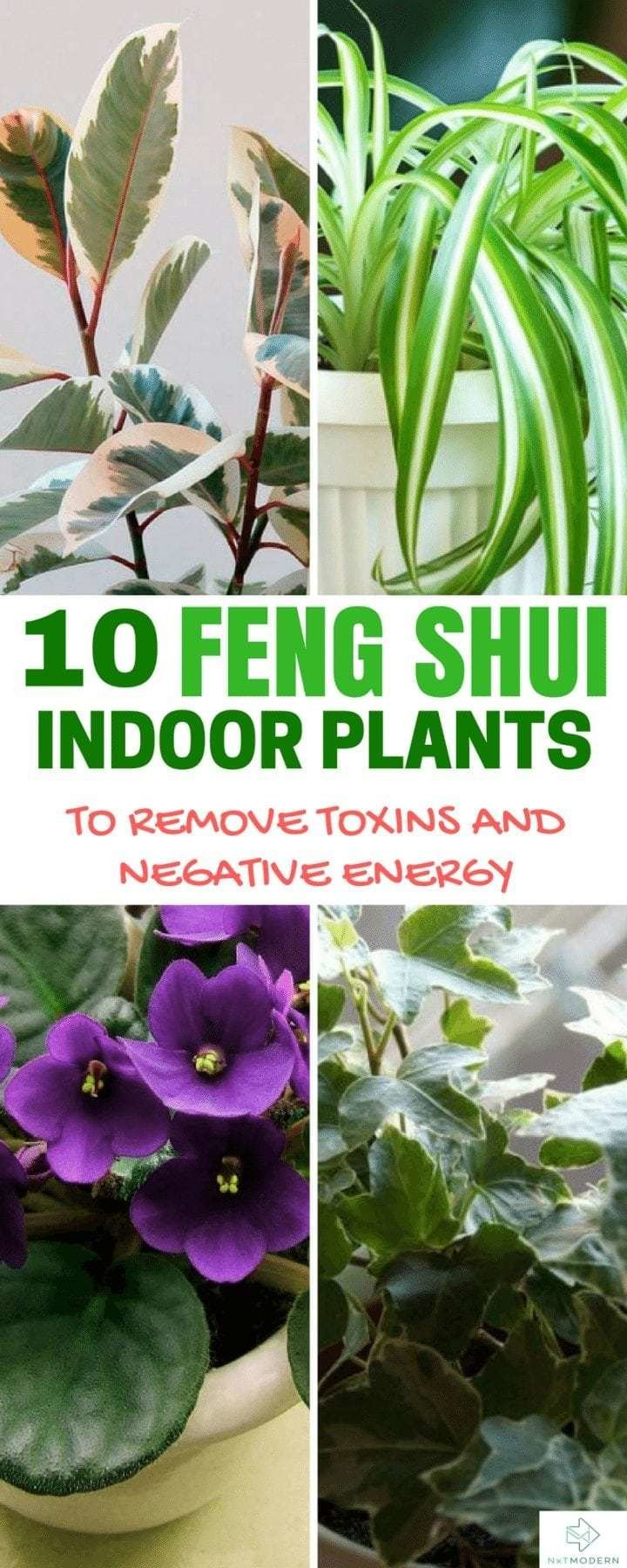 Best 10 Feng Shui Indoor Plants To Spruce Up Your Interior Decor With Pictures