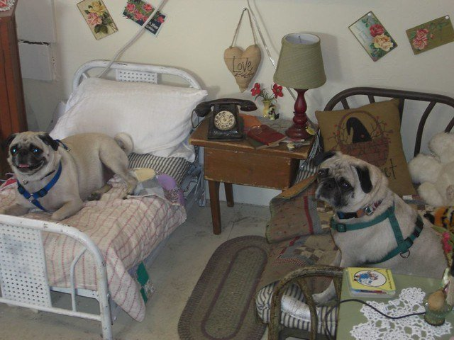 Best Antique Dog Bedroom Set Dogs Not Included Comfort Tx Flickr With Pictures