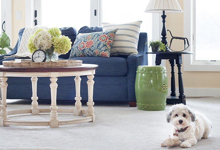 Best The Best Carpet For Pets With Pictures