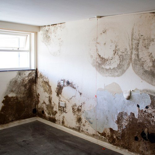 Best Mould In Bedroom Symptoms Www Indiepedia Org With Pictures