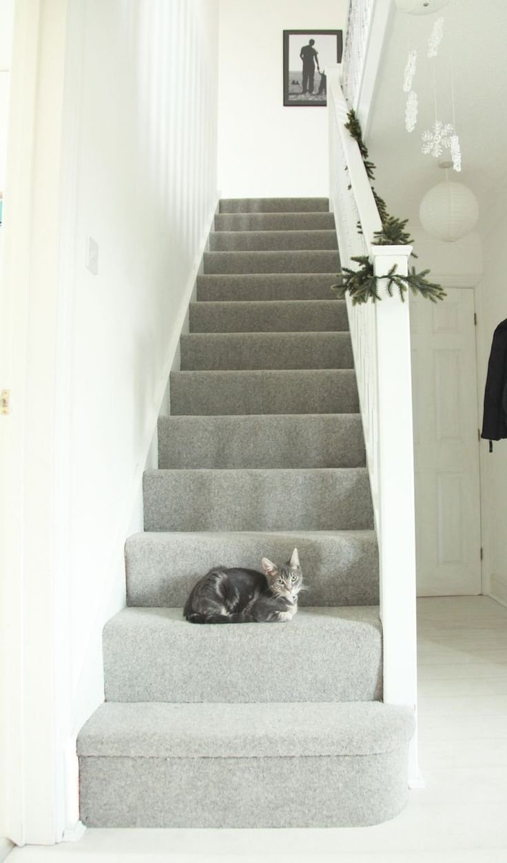Best 25 Grey Carpet Ideas On Pinterest With Pictures