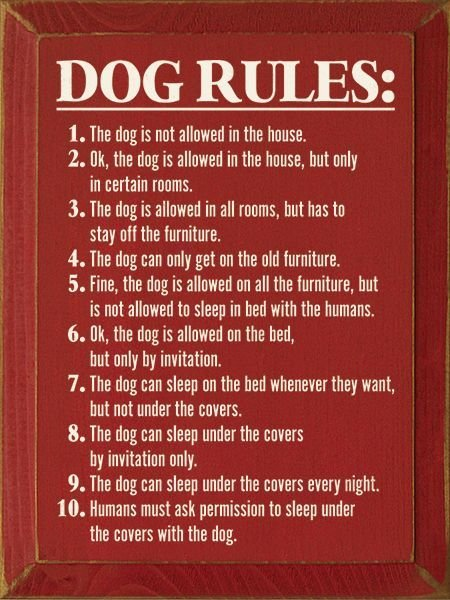 Best Dog Rules 1 The Dog Is Not Allowed In The House The Old All And Do With Pictures