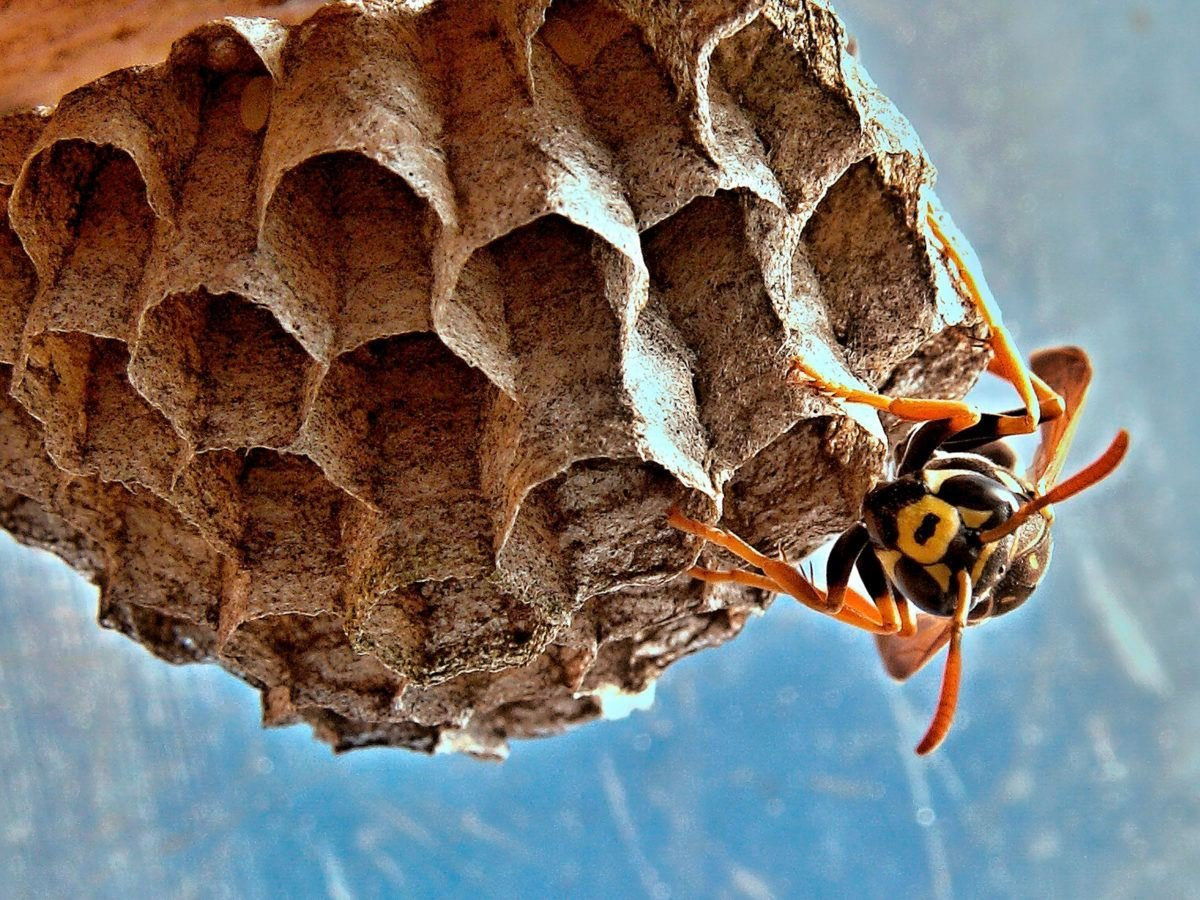 Best There S A Wasp In My Bedroom Www Indiepedia Org With Pictures