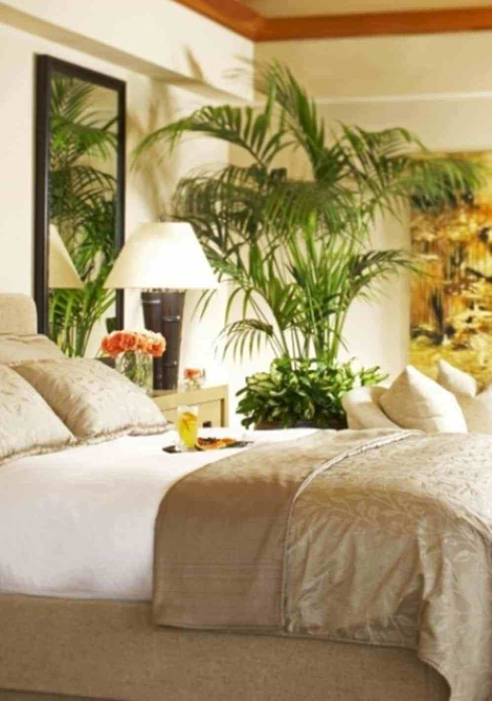 Best Bright Tropical Bedroom With Wall Mirror And Palm Tree Houseplant Making A Paradise With With Pictures