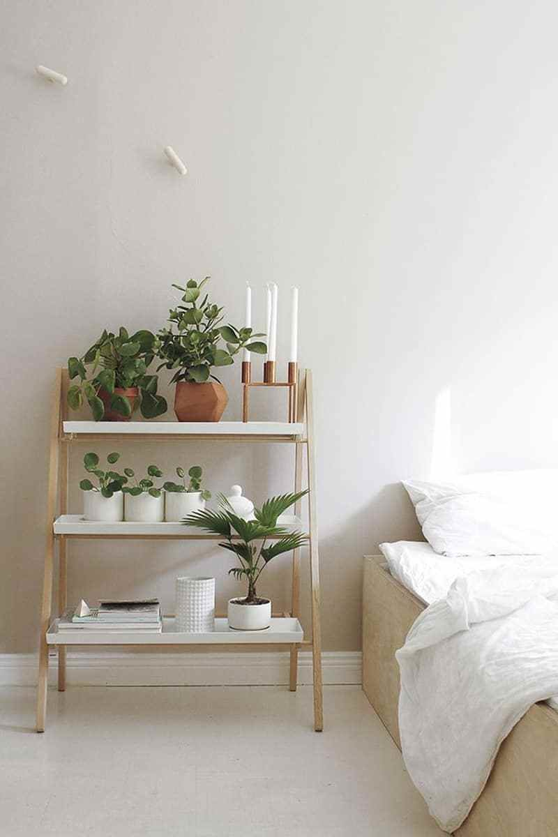 Best How To Decorate Your Interior With Green Indoor Plants And With Pictures