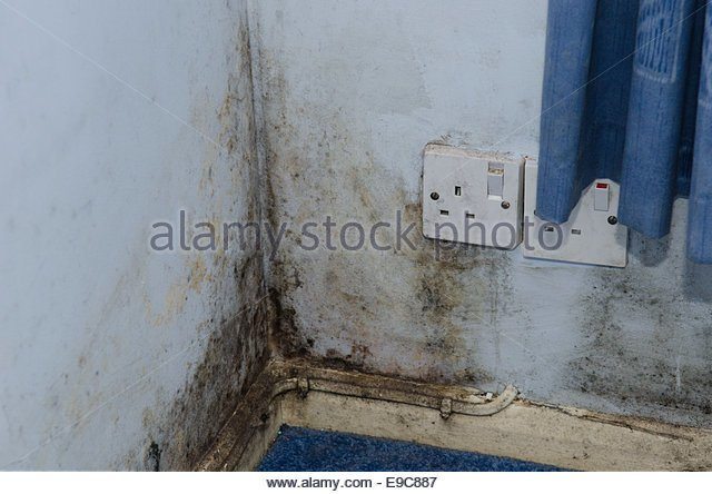 Best Damp Wall Stock Photos Damp Wall Stock Images Alamy With Pictures