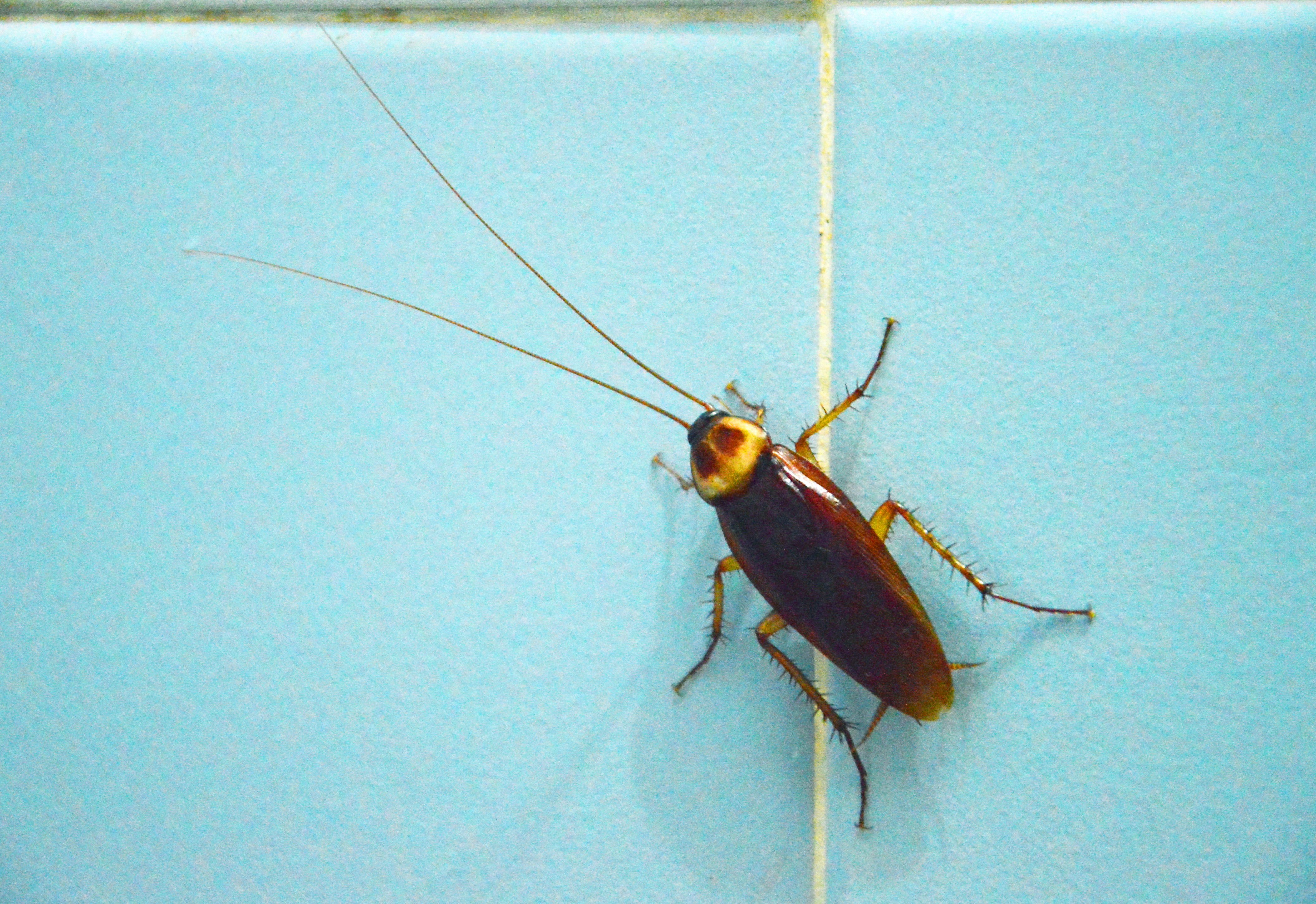Best How To Prevent Cockroaches In Bedroom Sculptfusion Us With Pictures