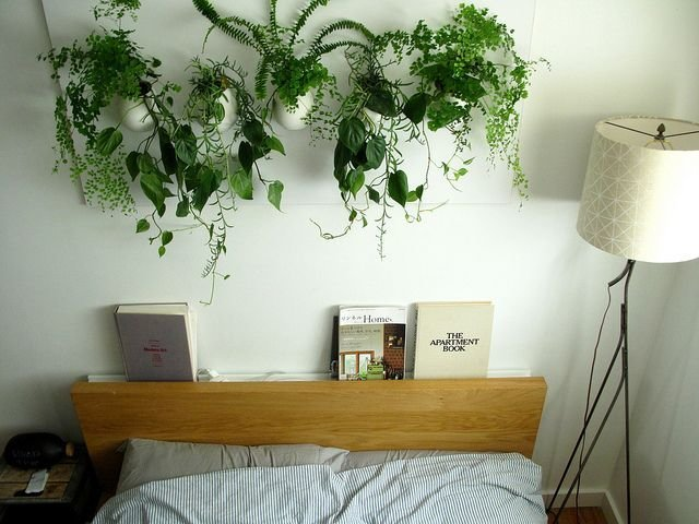 Best Bedroom Plants Hanging Pinterest With Pictures