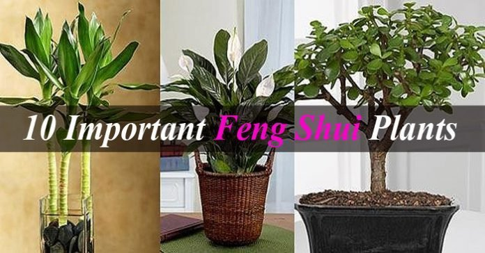 Best 10 Important Feng Shui Plants To Invite Wealth Happiness With Pictures
