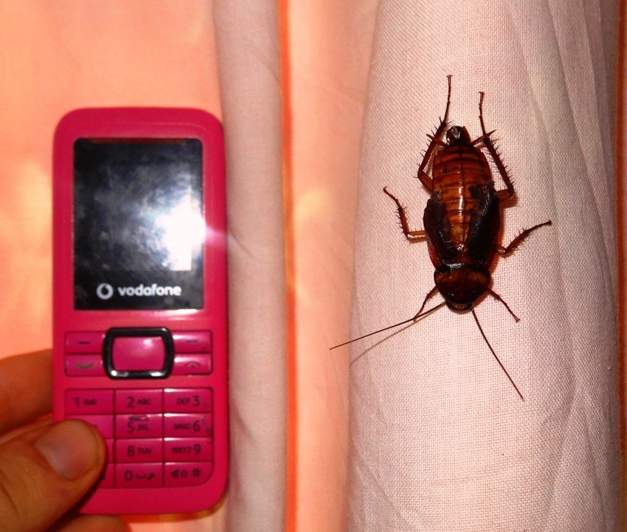 Best Rogue Roaches Tessa And Nick In Uganda With Pictures