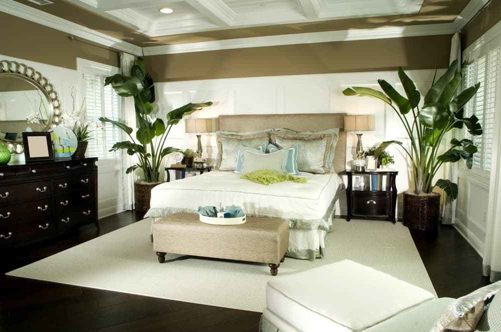 Best Why Feng Shui Doesn't Like Plants In Bedroom – Backed By Science Feng Shui Nexus With Pictures