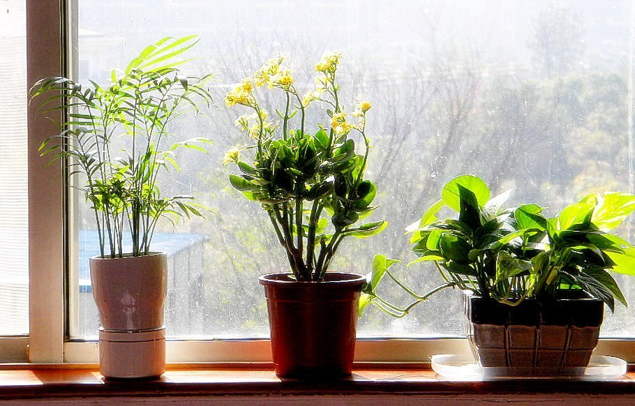 Best Feng Shui Q A Plants In The Bedroom The Tao Of Dana With Pictures