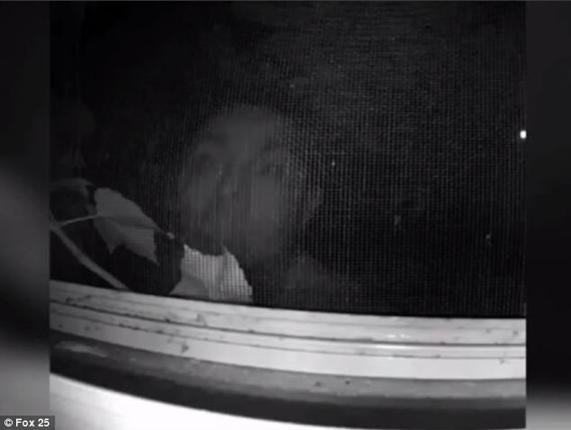 Best Peeping Tom Caught On Film Outside Boston Woman S Bedroom With Pictures