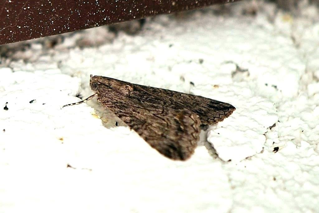 Best Pantry Moths In Bedroom – Lolgical Me With Pictures