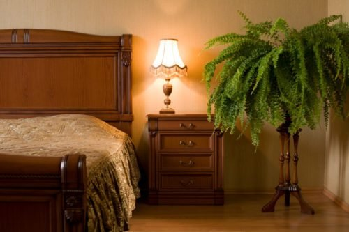 Best Why Doesn't Feng Shui Like Plants In The Bedroom Open With Pictures