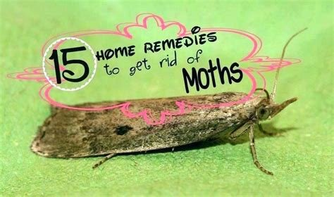 Best Pantry Moths In Bedroom – Stuartsimpson Me With Pictures