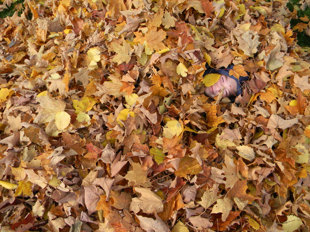 pile of leaves - HD1024×768