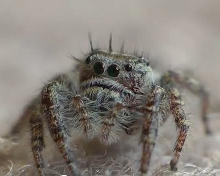 spider physical characteristics | Susan Wong