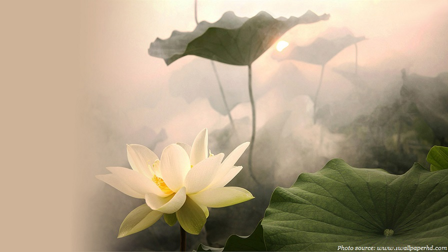 Interesting facts about lotus flower   Just Fun Facts lotus flower