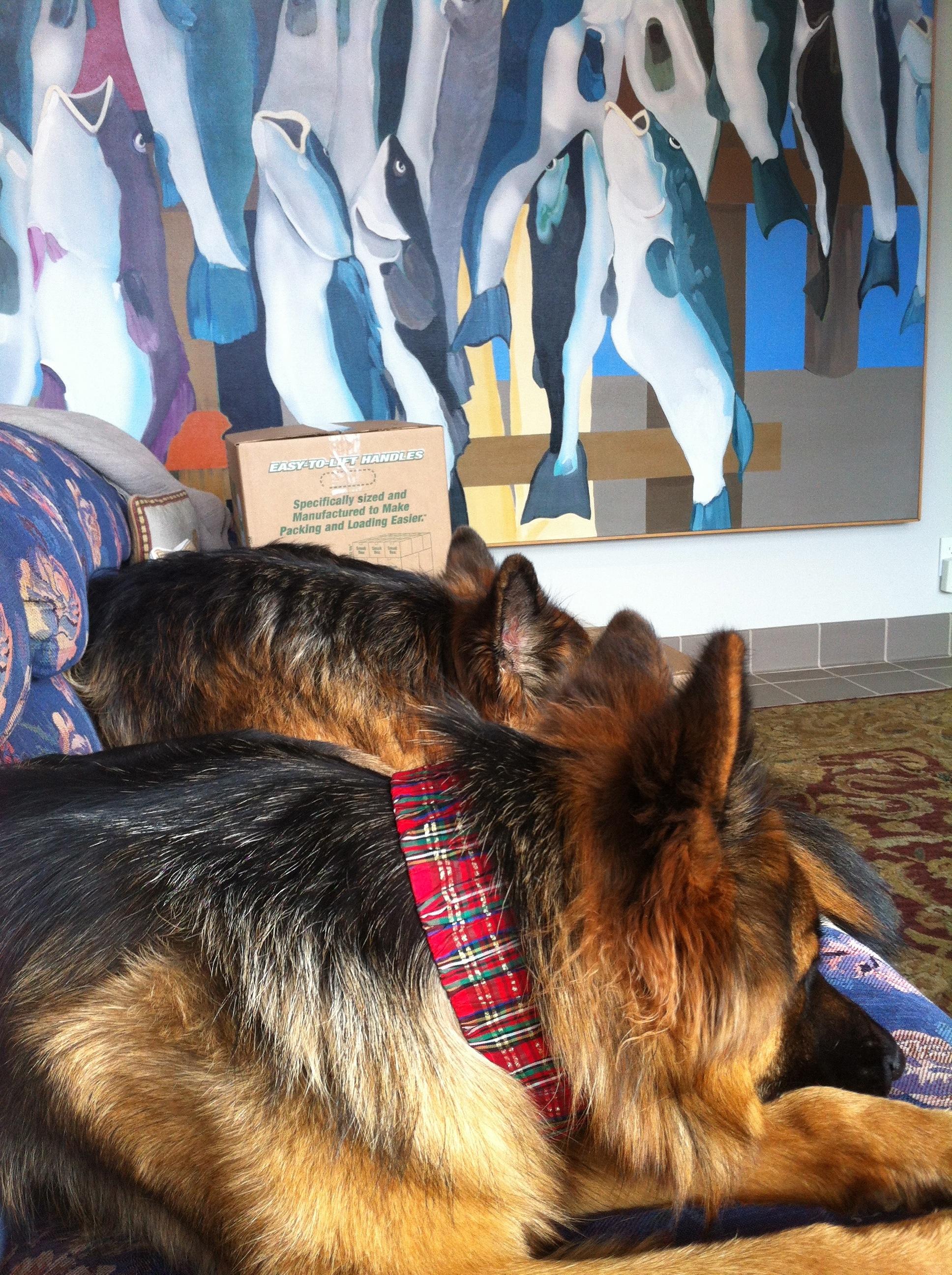 Kipling Puppy Crush The 2nd Christmas Justin Bog