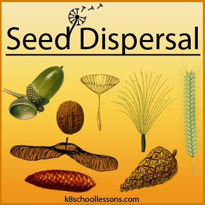 Seed Dispersal For Kids Examples Of Seed Dispersal Agents