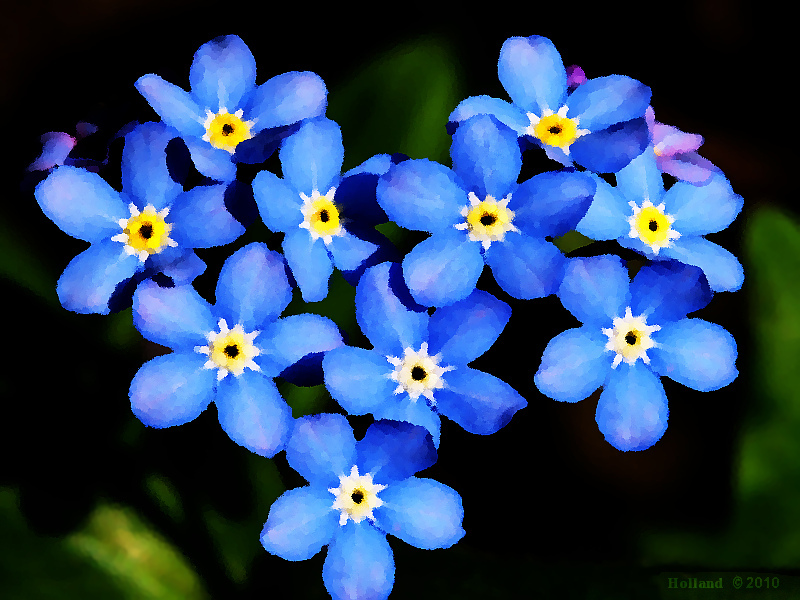 Forget Me Not   Touching the King  Forget Me Not