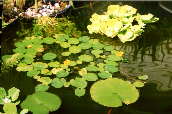 What Plant Around Small Pond