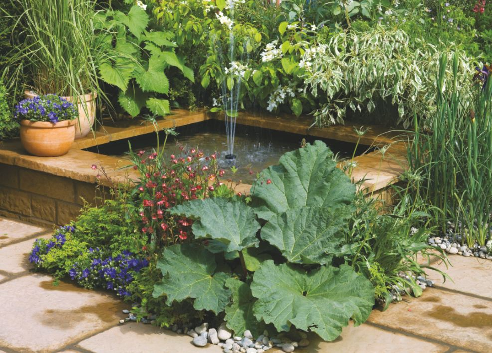 Raised Fish Pond Designs