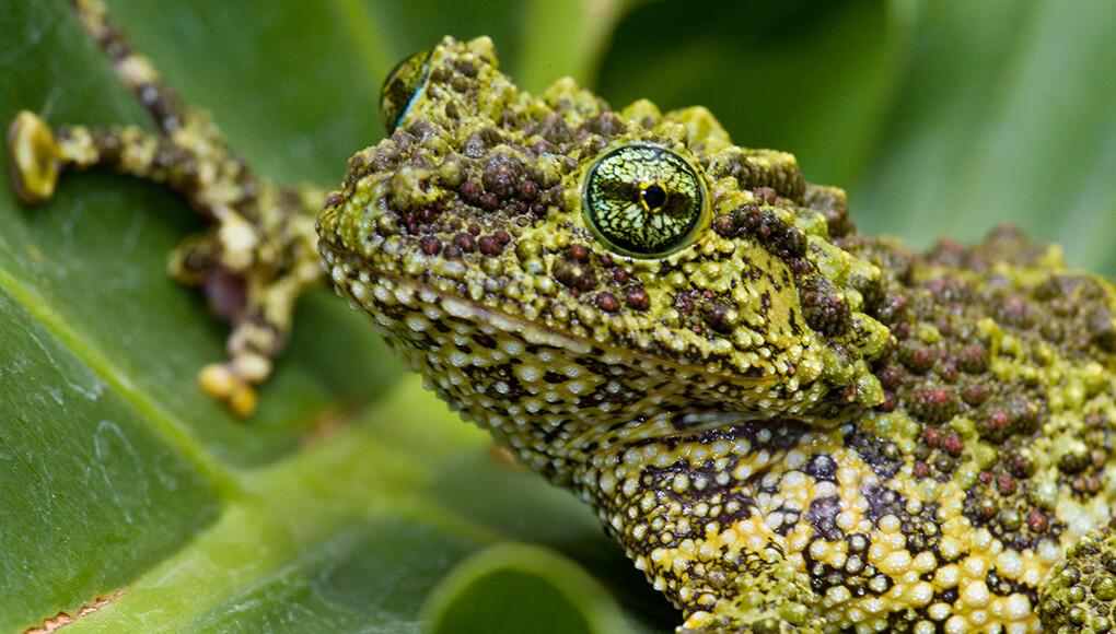 Fantastic frogs | San Diego Zoo Kids