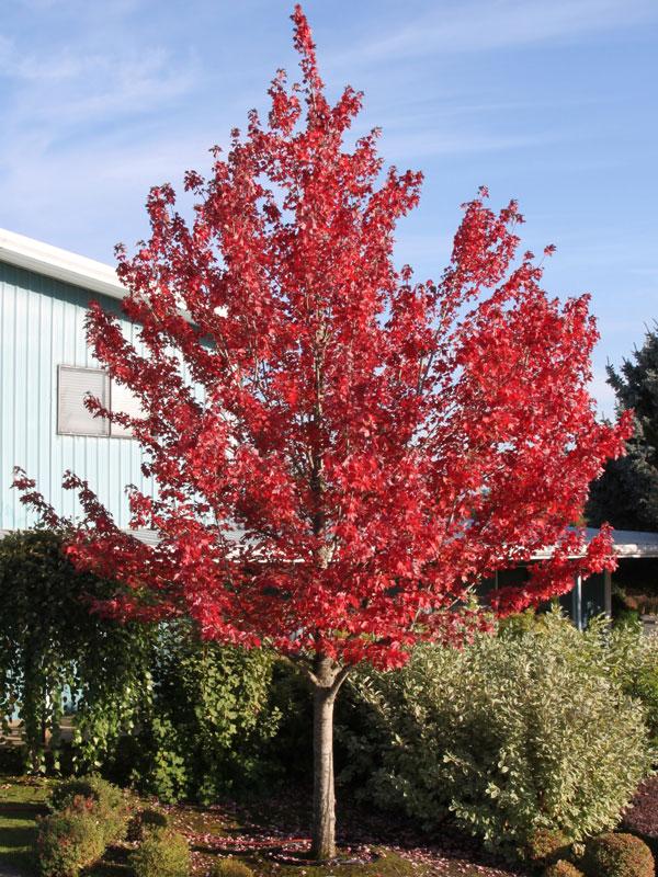 Fall Trees 9b Color