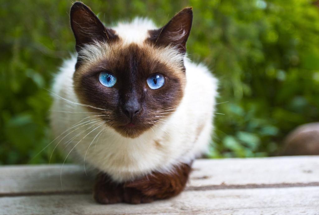 猫の口ひげの種類は何ですか