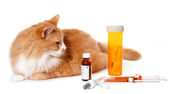 Jak udělat injekci kočka intramuskulárně