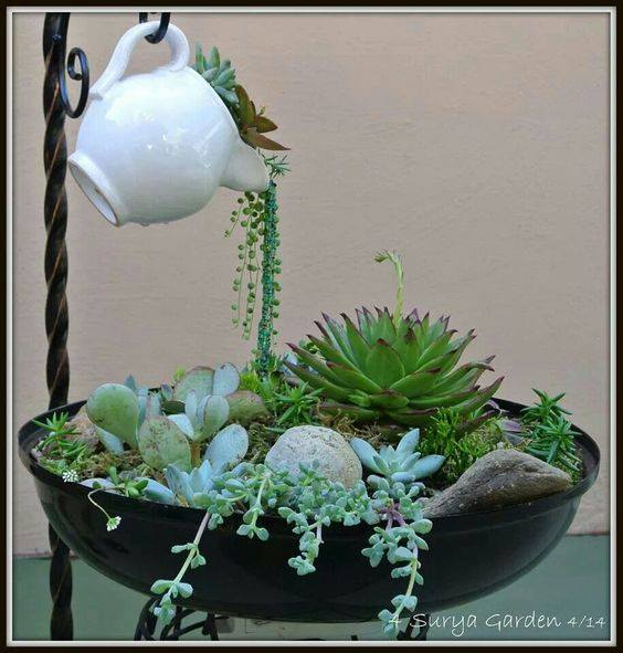 Tea Kettle Succulent Display...these are the BEST Garden Ideas!