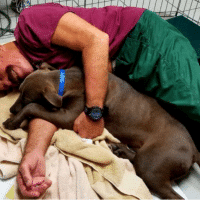 How to Become a Volunteer Dog Snuggler