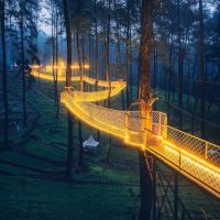 Tennessee's Treetop Skywalk