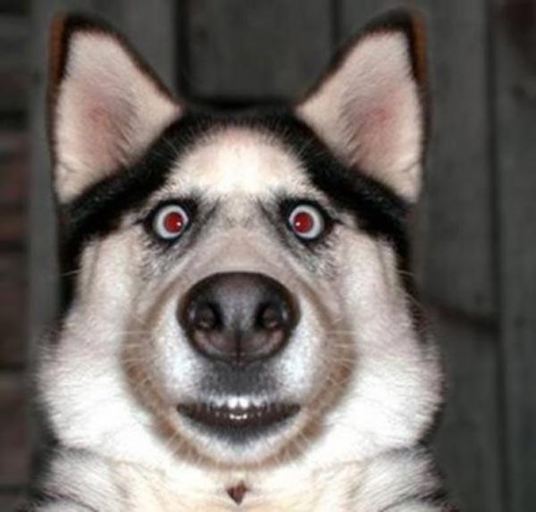 33 Adorably Surprised Animals 33 Photos