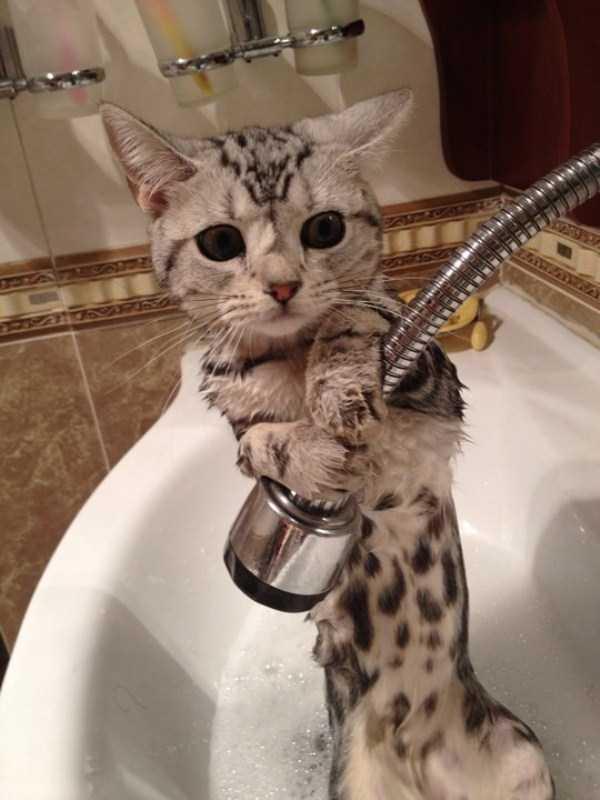Adorable Photos Of Animals Taking A Bath 68 Photos