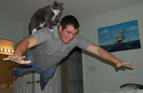 Adorable Cats In Funny Situations 37 Photos Klyker Com