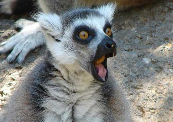 Cute Animals Making Surprised Faces 30 Photos