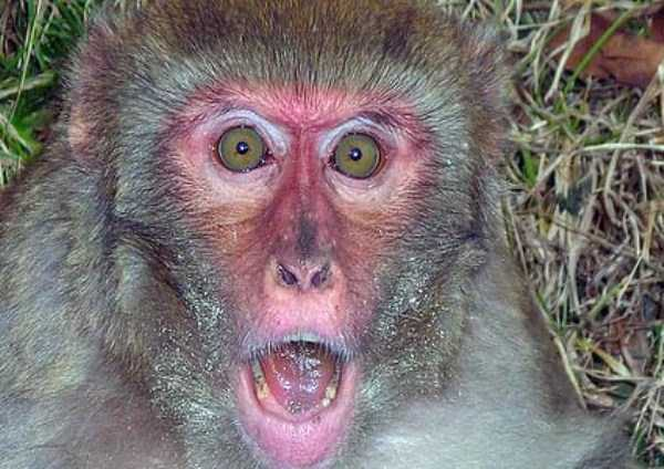 Cute Animals Making Surprised Faces 30 Photos Klyker Com